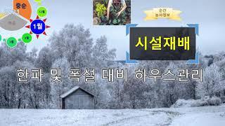 [농사정보(1월 중순)]  시설재배_한파 및 폭설 대비…
