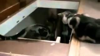 Gatto che spinge il suo amico giù per le scale !