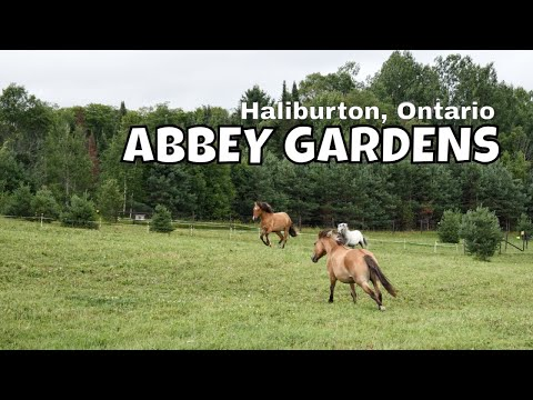 Things To Do in Haliburton, Ontario: Abbey Gardens [Travelling Foodie]