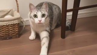 Осторожный кот - Новые приколы и фейлы за декабрь 2017