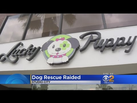 Nearly 70 Rescue Dogs Seized At Animal Shelter In Studio City
