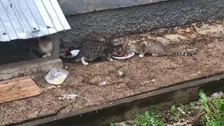 Помощь бездомной семье кошек, ч.1 - первое знакомство