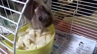 バナナ大好きルーイ