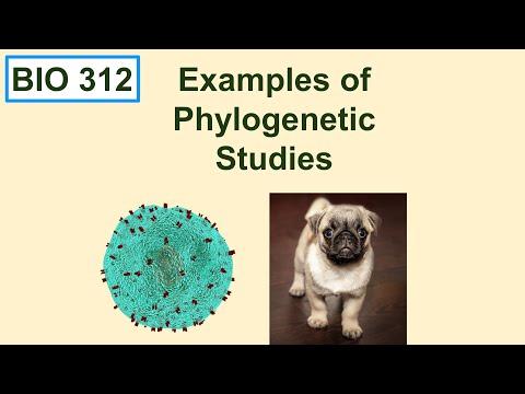 Bio 312 video 16: Phylogenetics 4, examples of phylogenetic studies