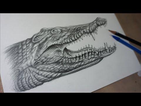 Cómo Dibujar un cocodrilo Realista a lápiz Paso a Paso - Tutorial
