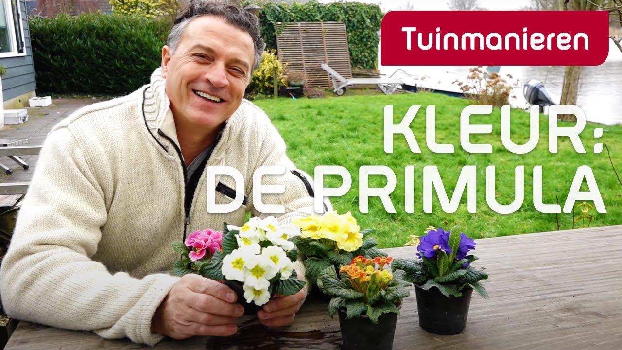 hoe krijg je kleur in de tuin in de winter ga voor de