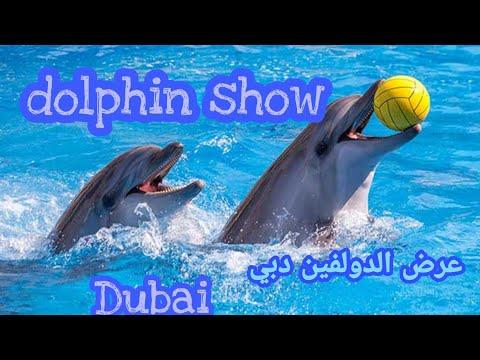 عروض الـ دولفين بـ دولفيناريوم بـ دبي dolphin show in dubai 1080p