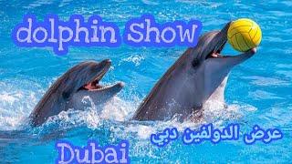 عرض الـ دولفين | عرض الدلافين دبي   beautiful dolphin show in dubai