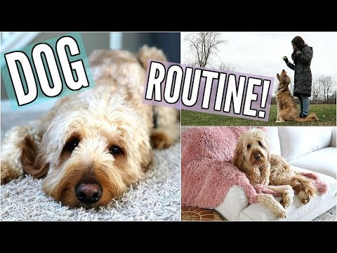GOLDENDOODLE PUPPY ROUTINE! IN OUR NEW HOUSE! UPDATES, PLAYING FETCH, & TREATS!
