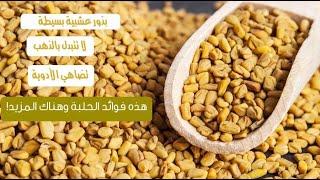 بذور الحلبة تضاهي الادوية لا تتبدل بالذهب ! اعرف الان فوائد الحلبة للرجال والنساء
