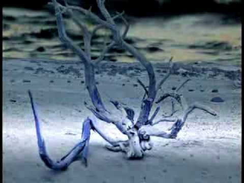 flaub - elementary of nature - sound art film