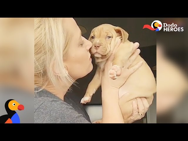 Tiniest Pit Bull Puppy Steals Her Foster Mom's Heart | Dodo Heroes