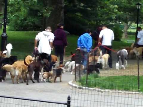 central-park-new-york-dogs