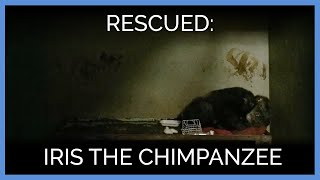 Rescue of Iris the Chimpanzee