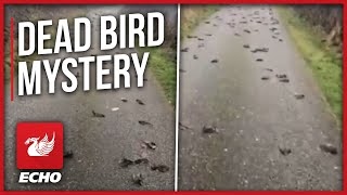 Mystery as hundreds of 'dead birds fall out of the sky'