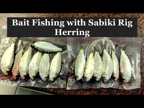 Bait Fishing With Sabiki Rigs, Herring.