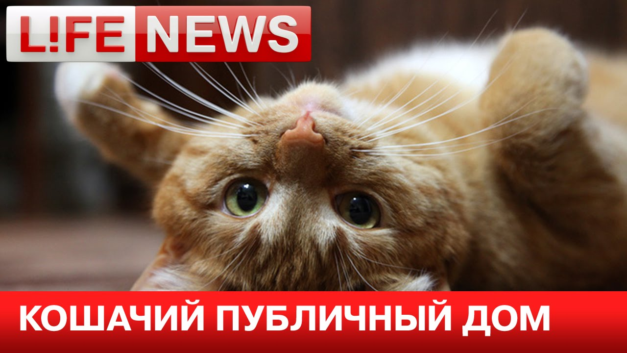 Бордель для котов