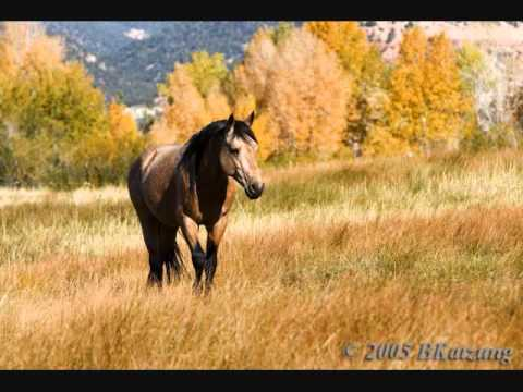 Buckskin Horse- Dave Stamey - YouTube