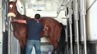 John Parker International Horse Transport New Volvo FH