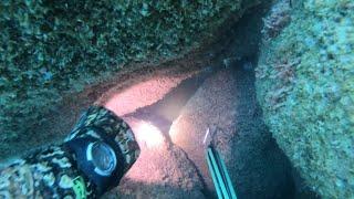 Холодная и глубокая рыба 100 подводная охота