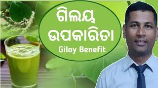 Guduchi Benefit   Giloy Benefit   Benefits of Giloy   Giloy Use Many Disease   Guduchi in Odia  