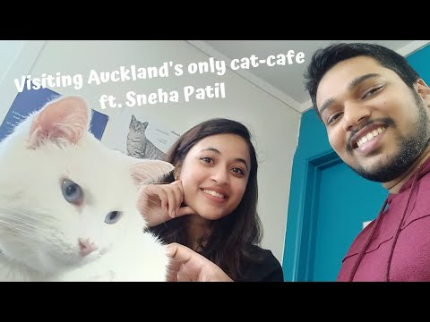 Visiting BaristaCats Cafe - Auckland's only cat-cafe ft. Sneha Patil   YOURS TRULY JAI