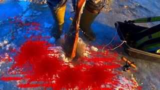 ЖЕСТЬ ЭТА БОРЬБА ДЛИЛАСЬ 24 МИНУТЫ ВЫ ДОЛЖНЫ ЭТО УВИДЕТЬ рыбалка зимой 2020