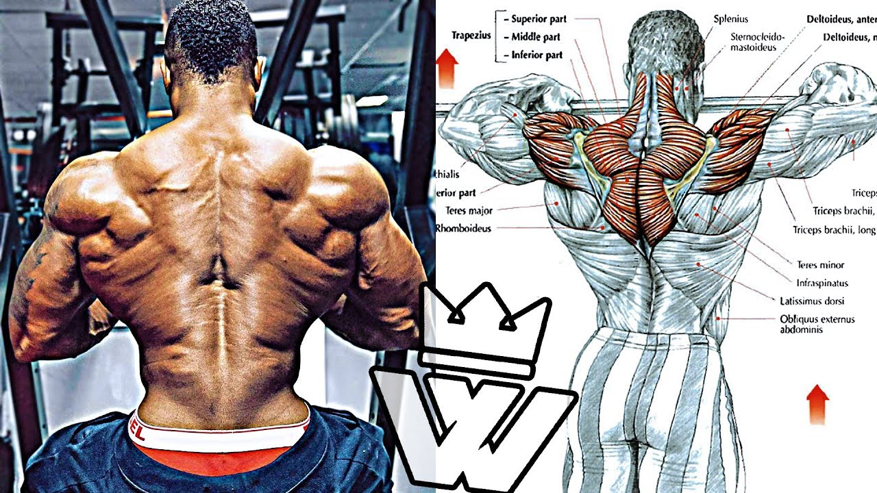 Workout for MASSIVE SHOULDERS, TRAPS and BICEPS!!