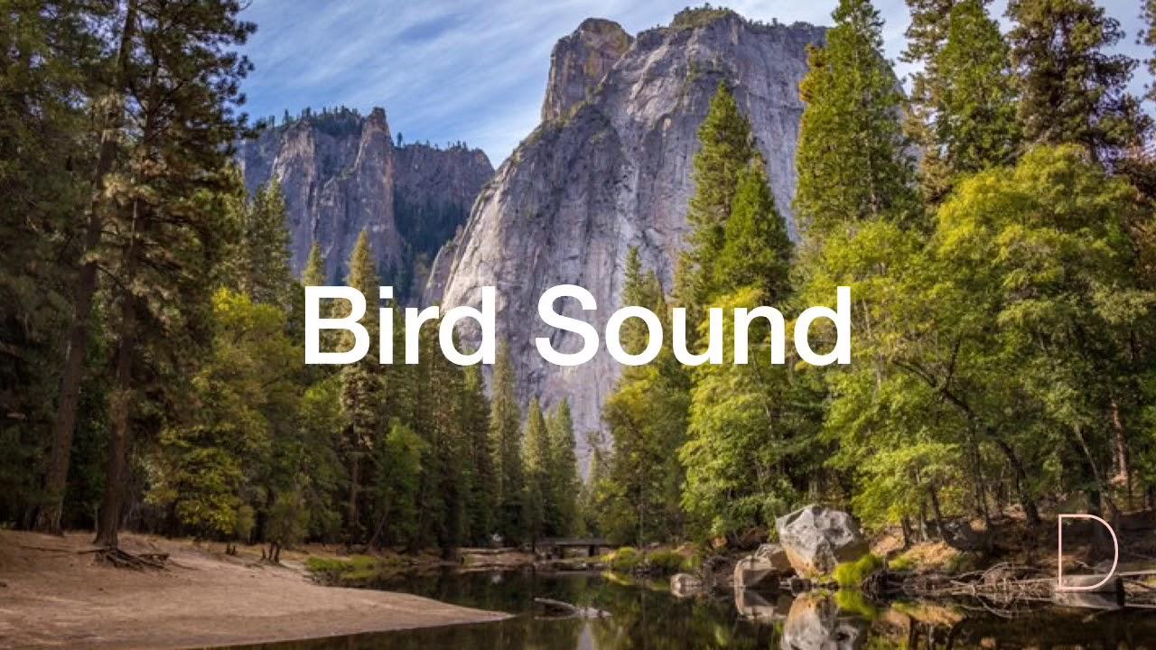 [Asmr]아침새소리 Bird sound