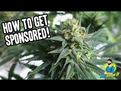 SPONSORSHIPS IN THE CANNABIS INDUSTRY! - UNFILTERED EPISODE 1