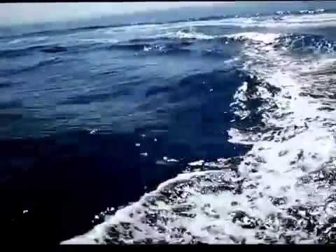 #Delfini Costa #Amalfi #Salerno video da youtube