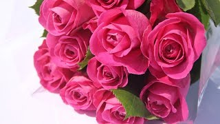 ภาพดอกกุหลาบสีสวย/ROSE