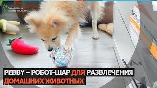 Pebby - робот для домашних животных (Robotics.ua)