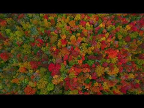 The Colors of Vermont