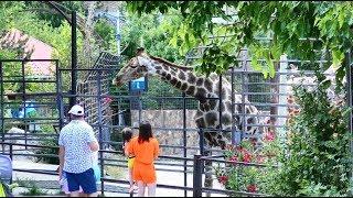 "Ялта. Зоопарк ""Сказка""."