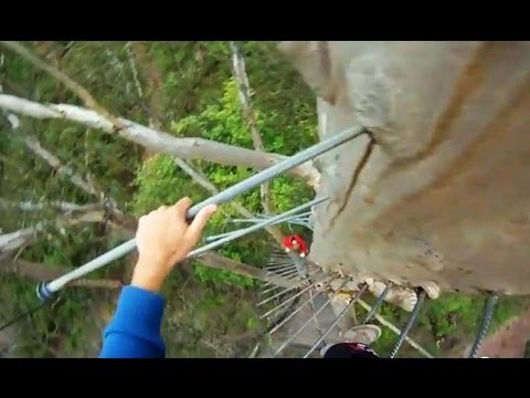 CLIMBING 72M GLOUCESTER TREE - NO SAFETY