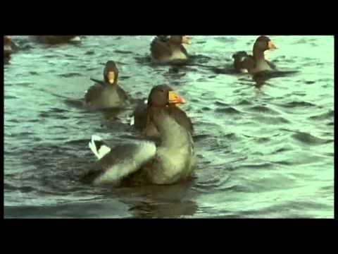 Brave - Josh Groban-  subtitulado español
