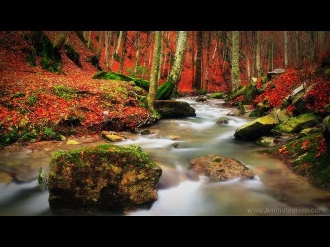 Babbling Brook In The Woods | Study, Sleep, Relax To Water Nature Sounds