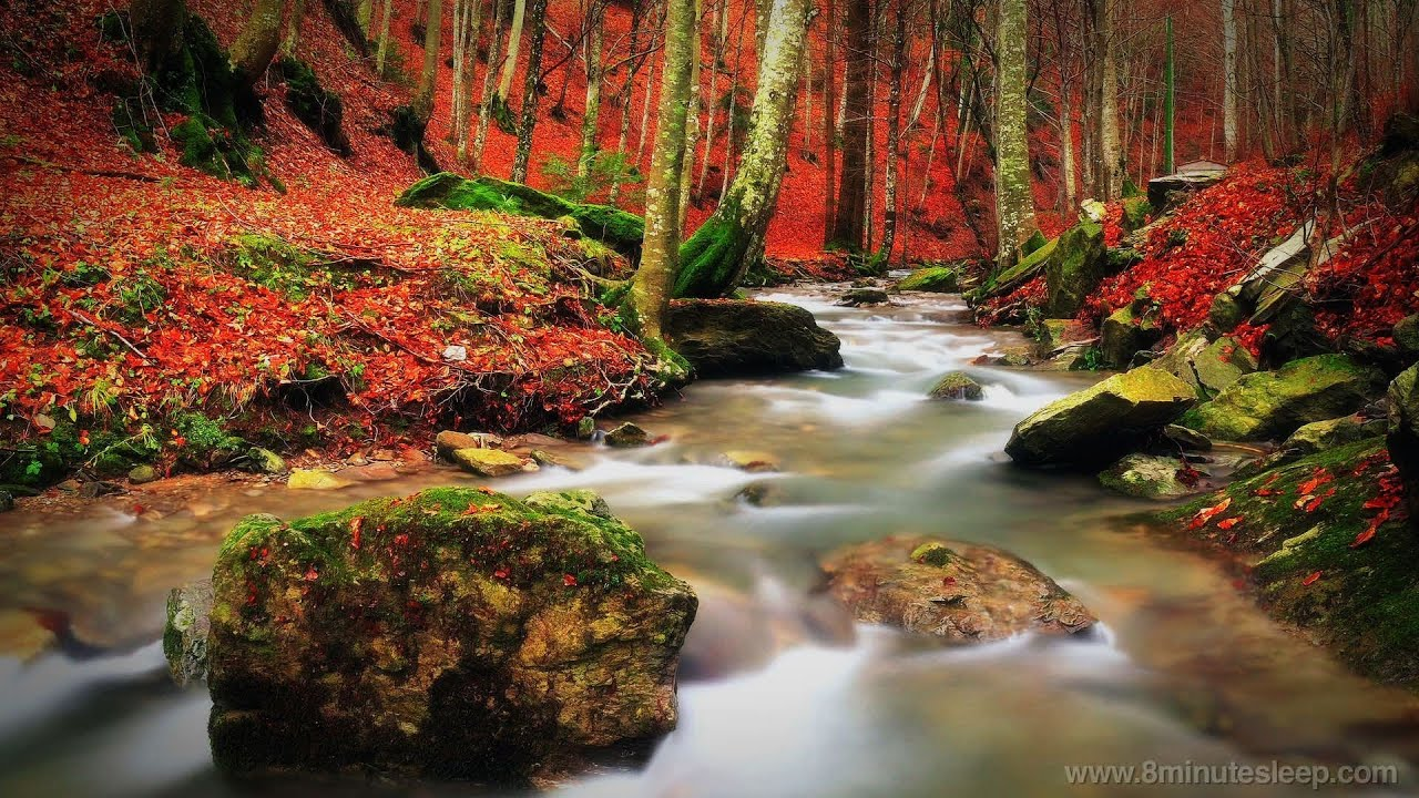 Fall Wallpaper Water Babbling Brook In The Woods Study Meditate Relax Youtube