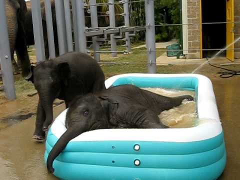 Baylor and Tupelo in the Pool
