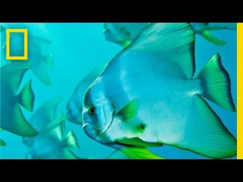 Brian Skerry: Ocean Soul | Nat Geo Live