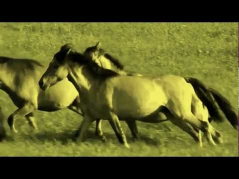 Chris rea horses