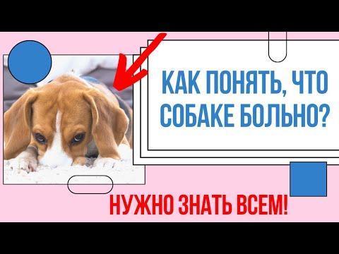 Как понять, что собаке больно? ЭТО НУЖНО ЗНАТЬ КАЖДОМУ! Секреты для любящих владельцев собак.