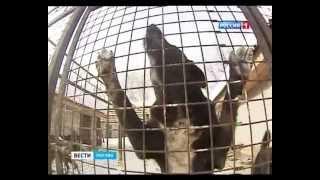 Бродячие собаки - уже 13 лет кормушка для чиновников(Стерилизация, приюты для бродячих собак - ежегодно только в Москве выделяется из бюджета 800 млн рублей. По..., 2013-02-10T08:32:54.000Z)