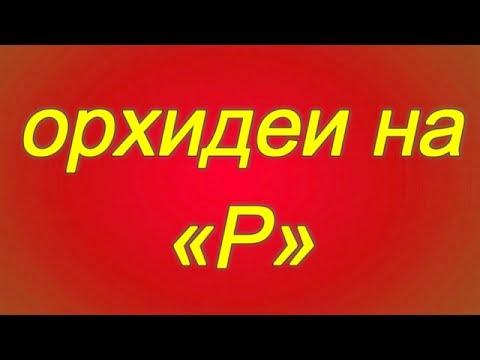 Растения на букву А, алфавитный список русских названий