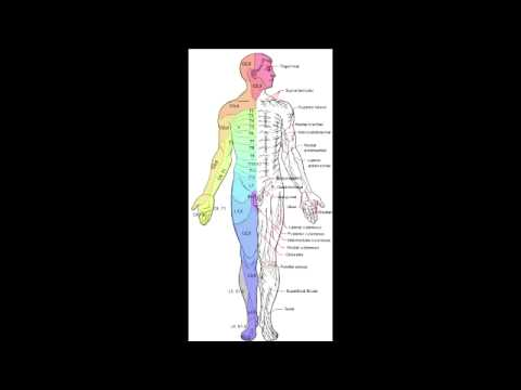 Landmark Dermatomes of Spinal Nerves