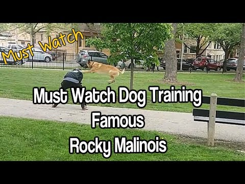 Must SEE Dog Training World Famous Malinois Rocky