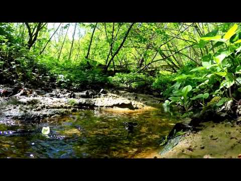 Stream in Forest Real Nature 1Hour Video and Sound For Relaxation, Yoga