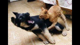 🐈Кто в доме главный?🐕 Подборка приколов про котов и собак!