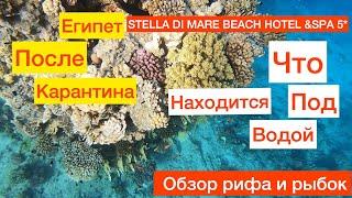 ЕГИПЕТ ПОСЛЕ КАРАНТИНА STELLA DI MARE BEACH HOTEL 5 ОБЗОР ПОДВОДНОГО МИРА И РИФА